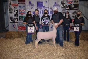 NOC Sheep Center results